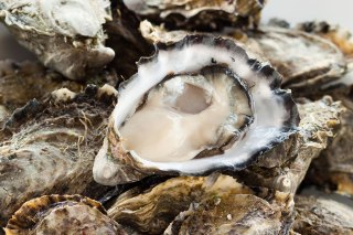 oysters-01