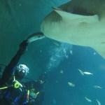 オーストラリアでサメに餌付けできる水族館の場所は?ダイビングライセンスや料金は?