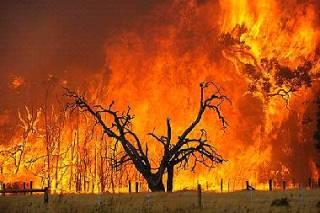 blacksaturdaybushfires