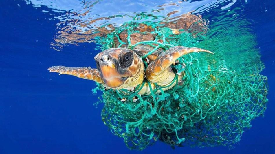 Resultado de imagen para desechos plásticos