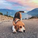 Hipster Beagle Photography And Aesthetic Image 6762921 On Favim Com