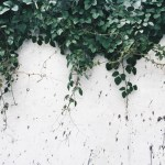 Free To Use Plant Aesthetic Plant Wallpaper And Plant Geek Image 7012415 On Favim Com
