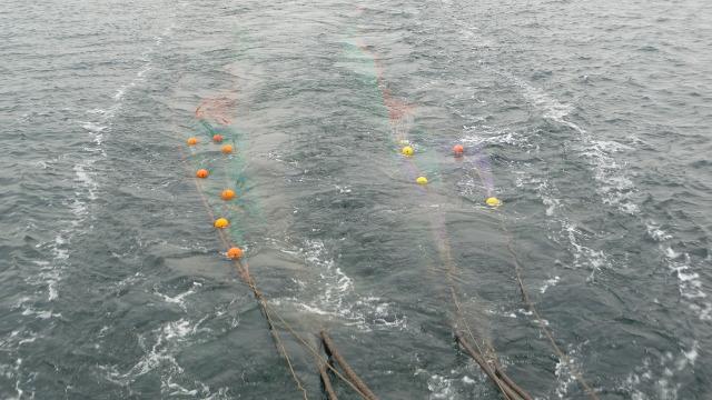 The fishing net cast under water / Ocean Great Ideas