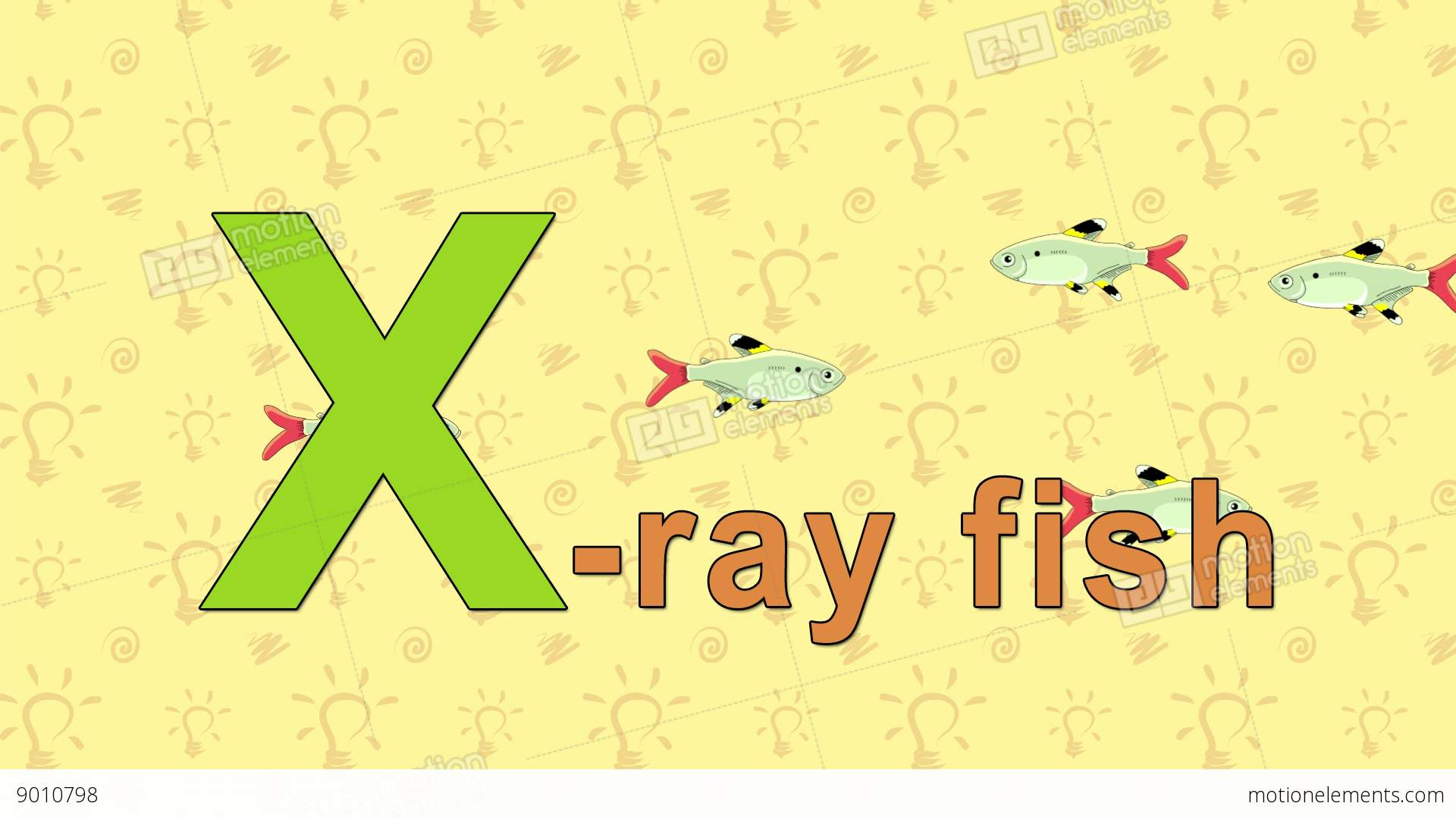 X Ray Fish English Zoo Alphabet