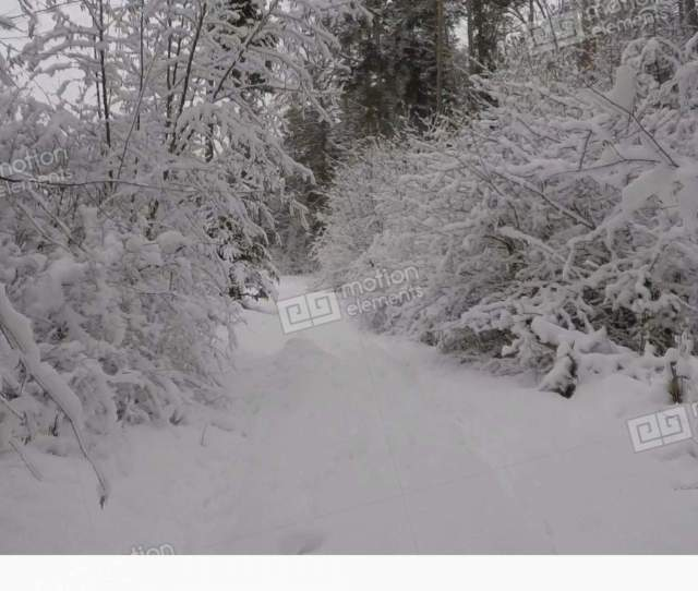 Walking In Winter Wonderland Through The Forest Stock Video Footage