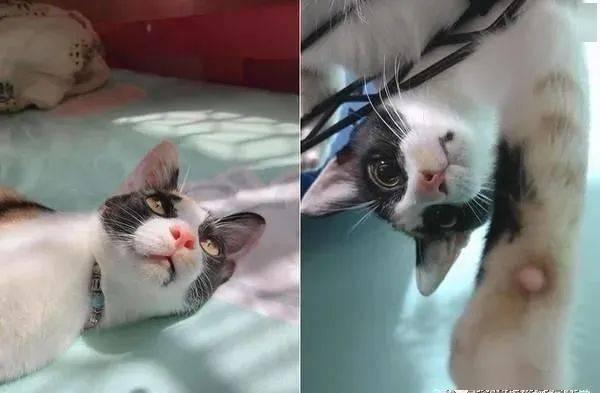 心愛小馬娃娃被拿去洗,三花貓醒來秒沖陽台拯救!