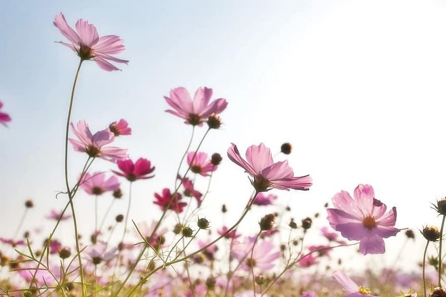 fleurs champ petales rose les