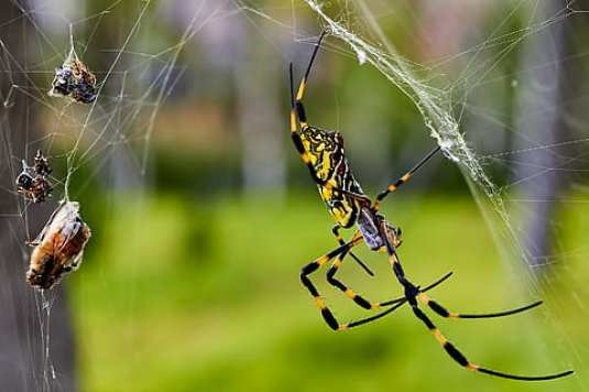 gratis laba-laba dengan mangsa foto | Piqsels