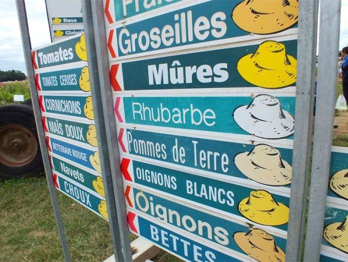 cueillette-ferme-viltain-chapeau-de-paille-jouy-en-josas-fleurs-mures-groseilles-tomates-cerises-mais-doux-champs-nature-courgette-choux (1)