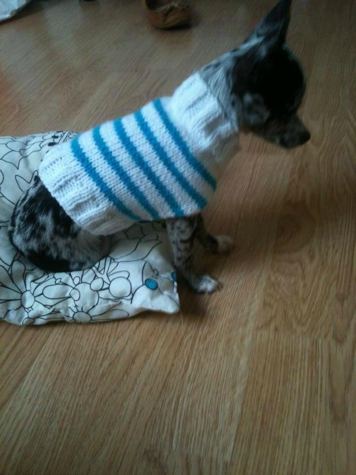 Pull Ralis Par Casse Bonbec Chihuahua Mon Amour