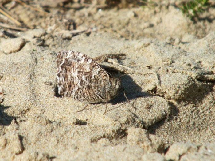 dunes-bretagne-finistere-baie-douarnenez-sainte-anne-la-palud-faune-flore-promenade-sortie-vacances (11)