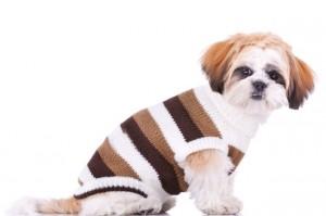 Hond met mantel