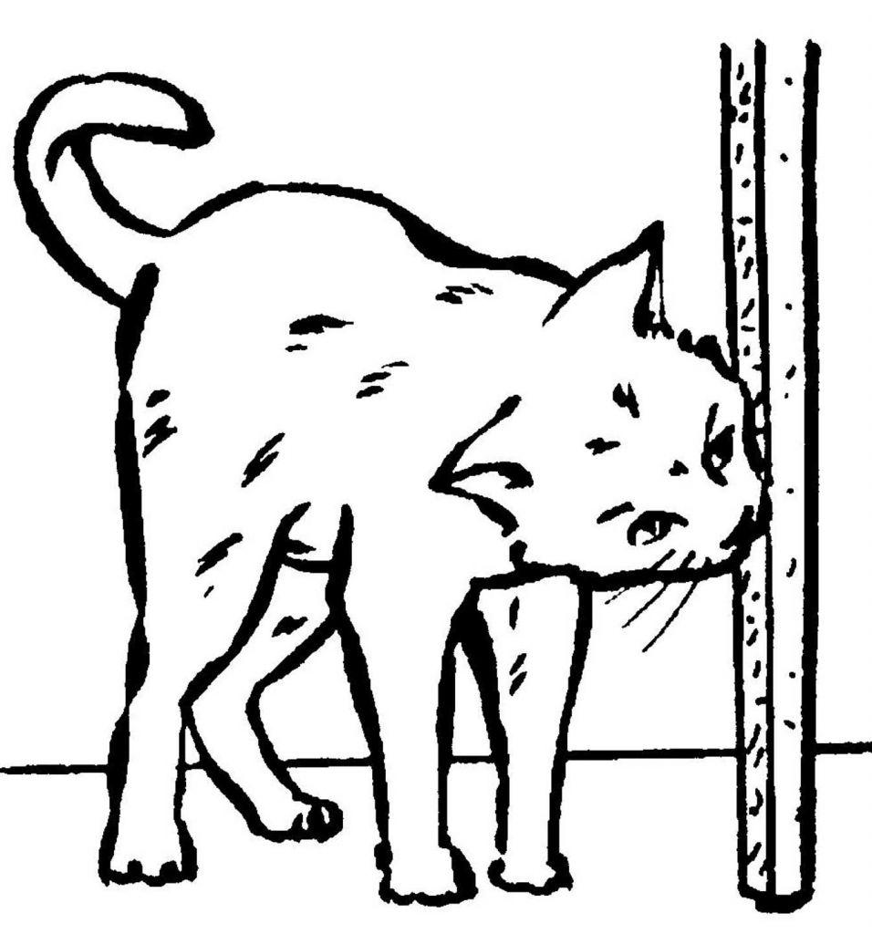 Site pour chat en francais