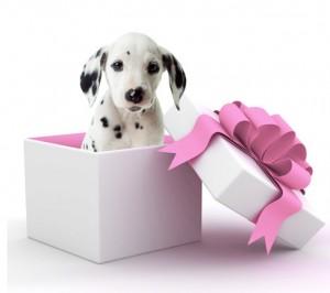 chien dans paquet cadeau