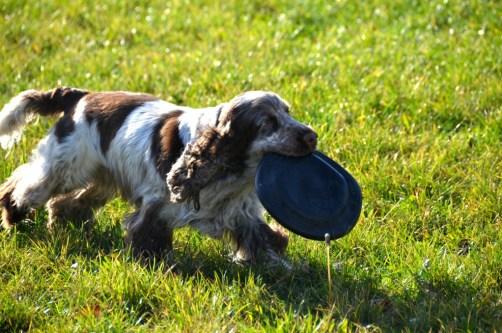 Frisbee pour chien Kong