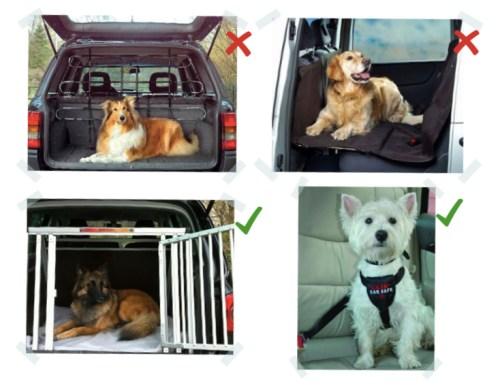 Articles de sécurité pour chien en voiture