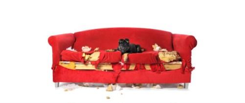 Destruction canapé par chien