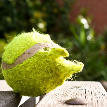 Balle de tennis machouillée