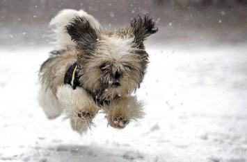 chien court dans la neige