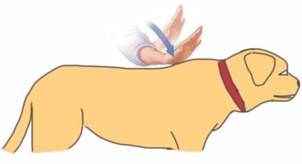 Claques sur le dos chien qui s'étouffe