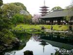 senso-ji-jardin-japonais-etang-pagode-photo hibinoyorokobi