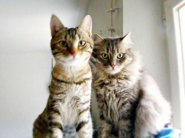 mes-chats-yoshi-et--Joy