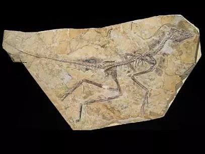 Fóssil descoberto na China pode ser da ave mais antiga já descoberta por cientistas Foto: T.HUBIN - IRSNB / BBCBrasil.com