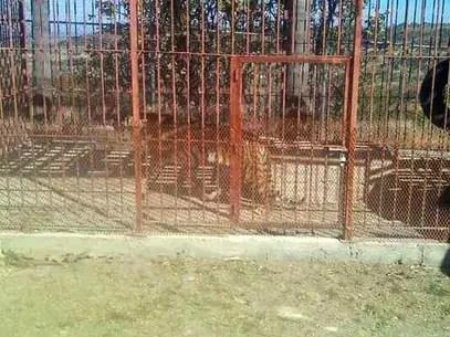 La presencia de los animales fue reportada a autoridades ambientales. Foto: Reforma