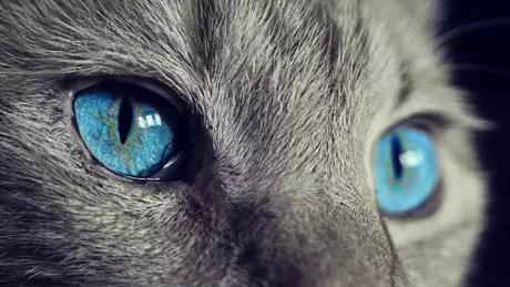 Para os gatos, os benefícios da vida em grupo não compensam ter que dividir comida