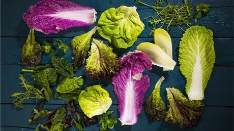 Frank Morton has become a reference in lettuce in the US, attracting chefs to his farm