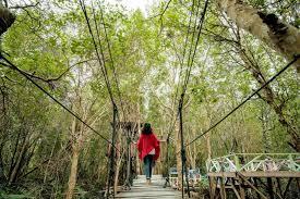 Photo of Asahan Punya Wisata Alam Tracking Mangrove Di Silo Baru