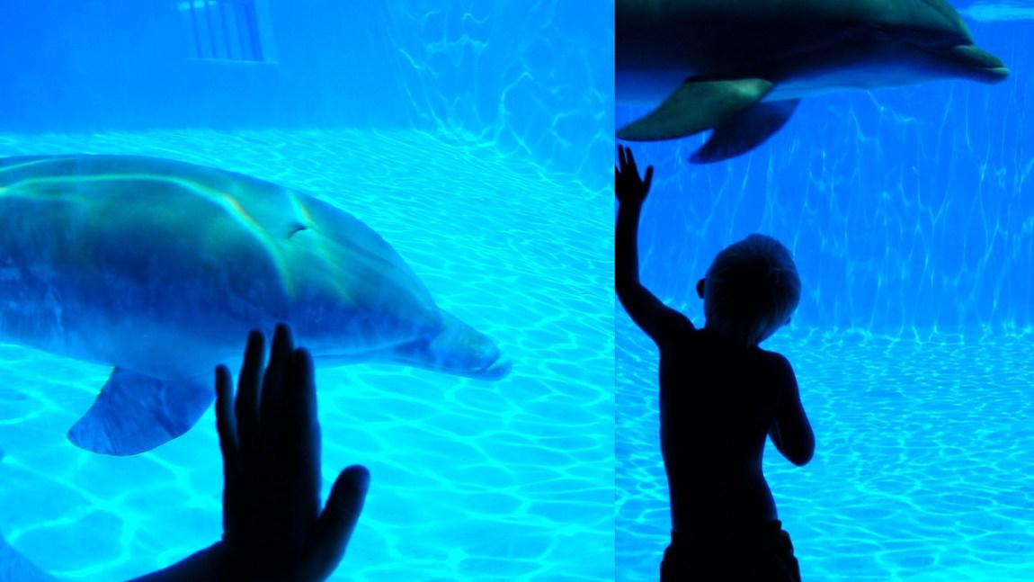 Delfiner (Foto: Morten Skogly, NRK)