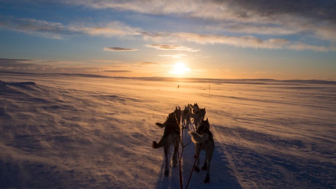 """På vei fra Jergul til Karasjok, møter soloppgangen Marte og hundene over """"Hundevidda""""."""