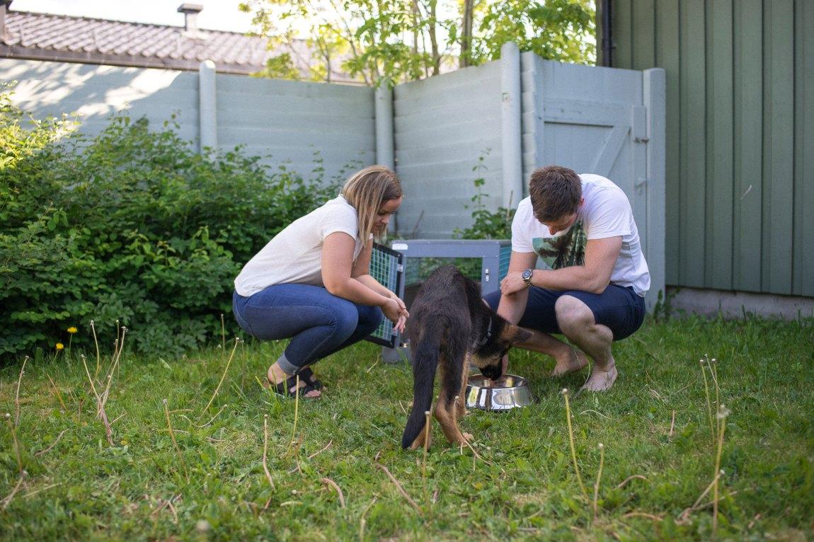 Marie og kjærasten Nichlas passer på schäferkvalpen Lero. Nichlas er hundeførar i Forsvaret.  Foto: Lars Erik H. Andreassen