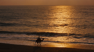 Kamel i solnedgang i Lawrence of Arabia (Foto: Sony Pictures Home Entertainment).