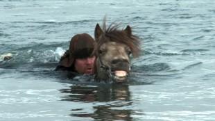 Hester kan også brukes til vanns i Om hester og menn (Foto: Europafilm).