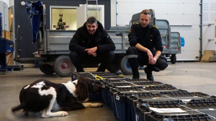 Charlie snuser på brev og pakker sendt fra utlandet på jakt etter ulovlige stoffer. (Foto: NRK P3)