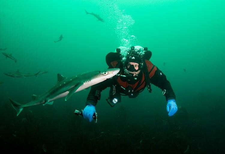 Bildet viser Fredrik under vatn, med ein liten pigghå framfor seg, og fleire større pigghåar som svømmer i bakgrunnen.