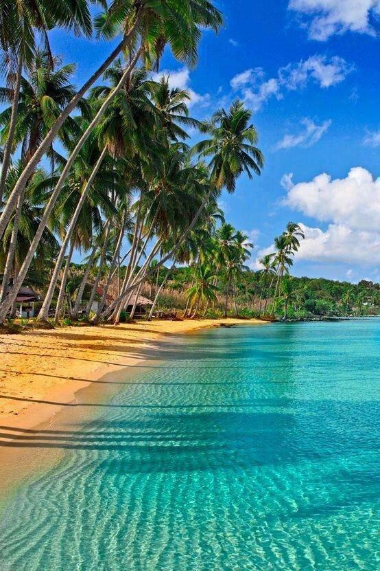ile plage palmier photo de endroit
