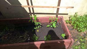 little_garden