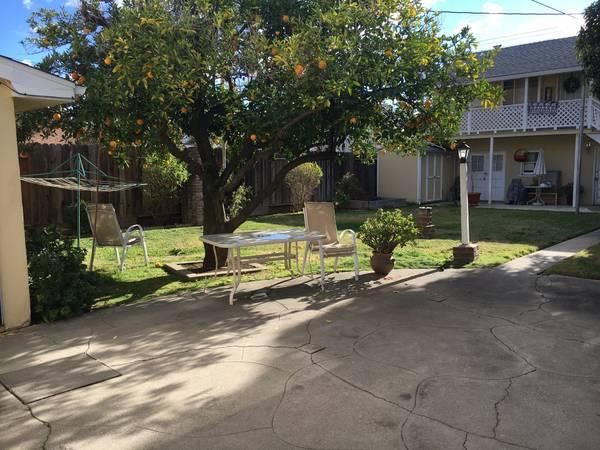 Score a backyard like this! Hello brick oven and orange tree!