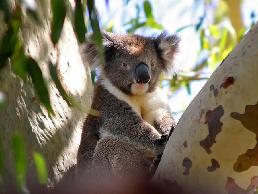 P3 Travel     australia3