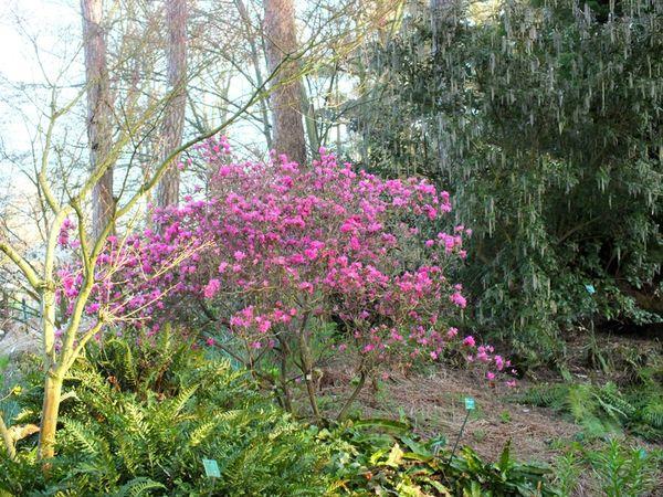 parc-floral-vincennes-printemps-fleurs-jonquilles-magnolias (13)