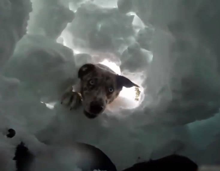 掉進雪洞本以為難逃一死,結果竟被剛剛收留的流浪狗竟然救了一命_狗狗
