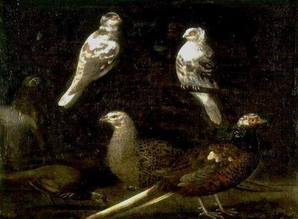 Faisans , perdrix rouges et pigeons , hst 60 x 80,8cm - musée des Beaux-Arts, Arras