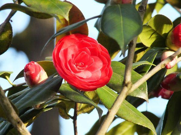 parc-floral-vincennes-printemps-fleurs-jonquilles-magnolias (9)