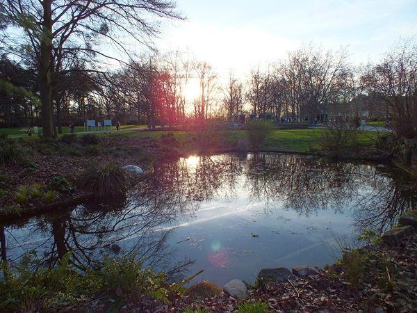 parc-floral-vincennes-printemps-fleurs-jonquilles-magnolias (25)