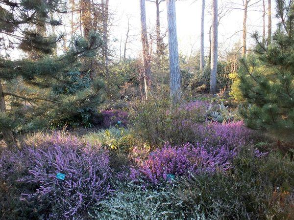 parc-floral-vincennes-printemps-fleurs-jonquilles-magnolias (19)