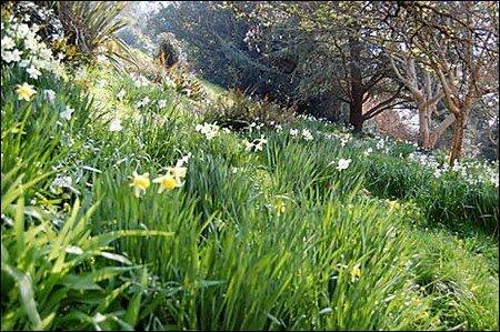 springtime_465x309