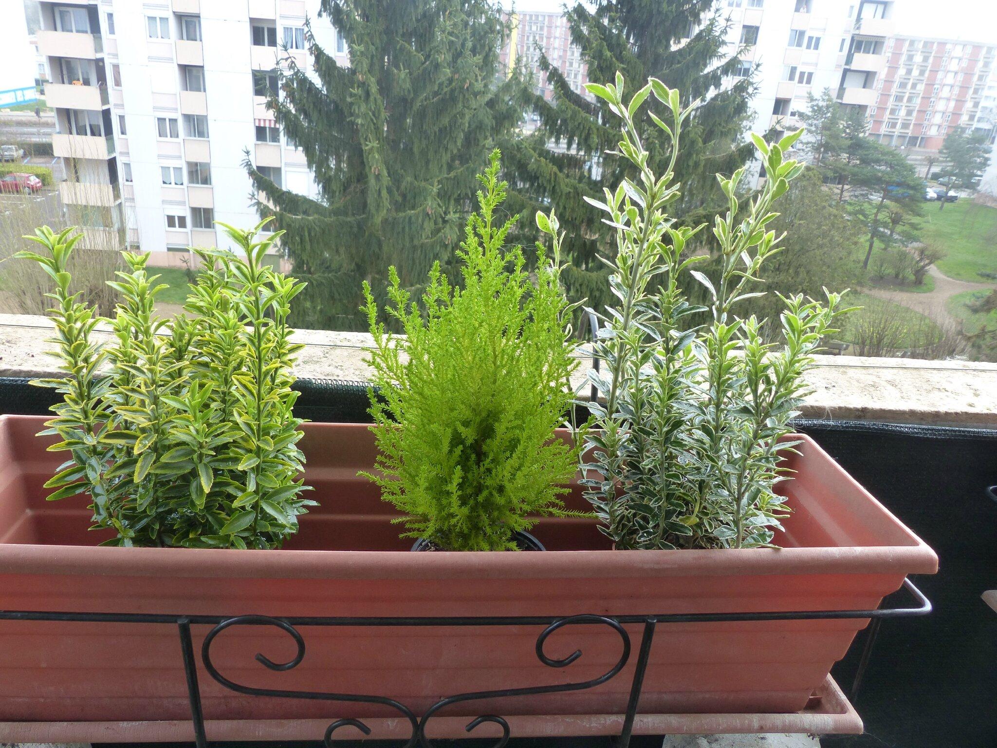 Plantes De Printemps Pour Jardinieres
